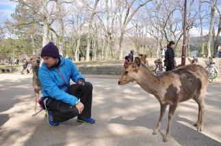 Japan, Nara, Deer