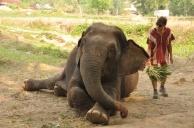 Thailand, Chiang Mai, Elephant Patara Farm