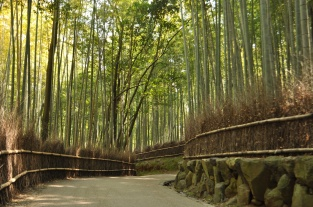 Japan, Kyoto, Bamboo groove