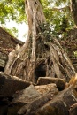 Cambodia, Angkor Wat, Ta Prohm