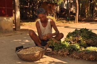 Vietnam, Erdnüsse Ernte
