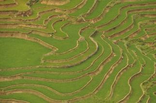 Vietnam, Sapa, Reisterrassen