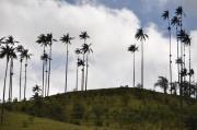 Kolumbien, Wachspalmen