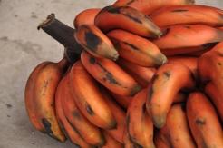 Ecuador, Saquisili Market, rote Bananen
