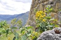 Peru, Kuelap